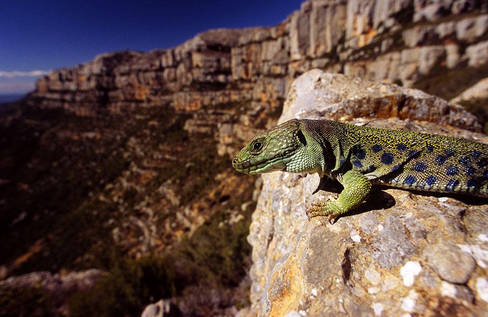 Disseny pàgines web Tarragona Parc Natural Serra de Montsant
