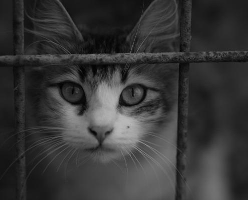 Imatge gat per FdCATS